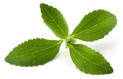 1386 2 - Stevia