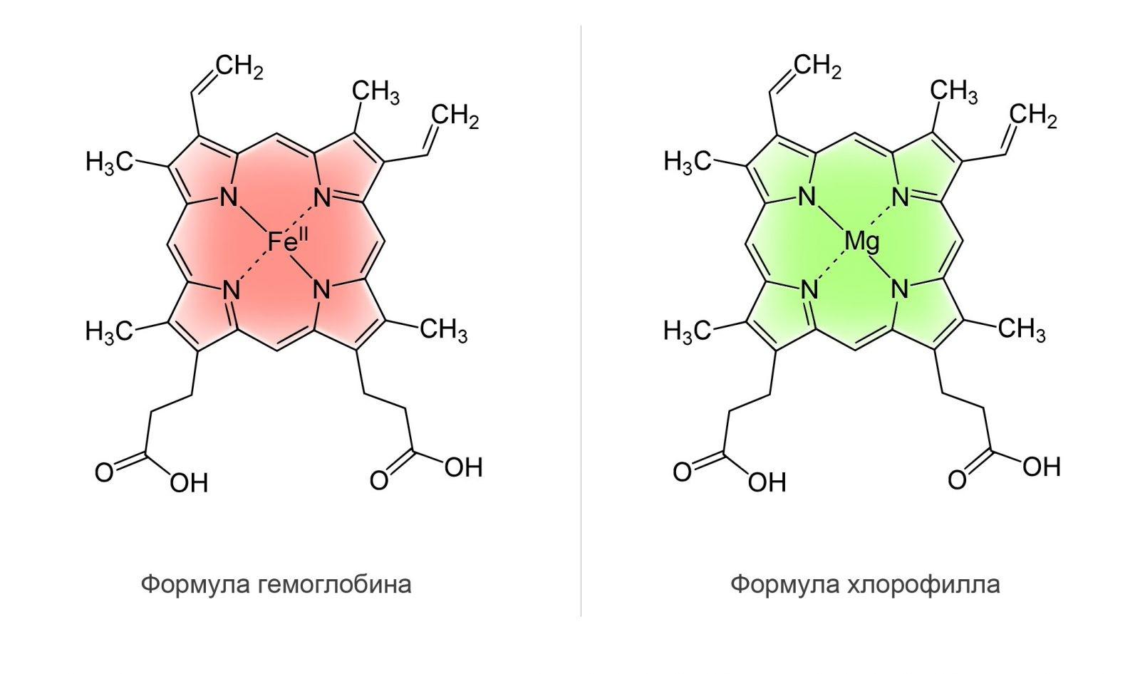 1580 2 - Chlorophyll Liquid — Жидкий Хлорофилл