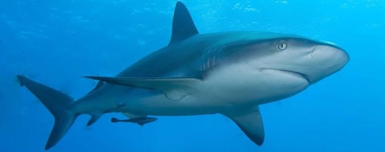 1602 3 - Shark Rei Formula — Шарк Рей Формула