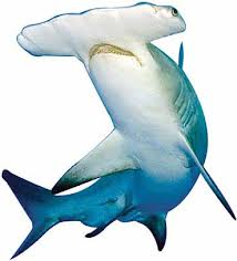 1602 4 - Shark Rei Formula — Шарк Рей Формула