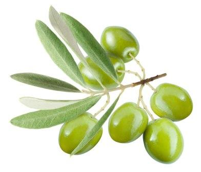 204 1 - Olive Leaf — Листья Оливы