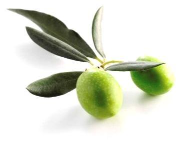 204 3 - Olive Leaf — Листья Оливы