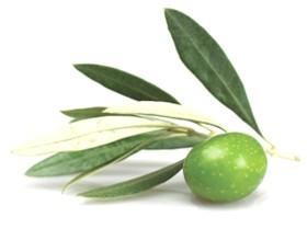 204 4 - Olive Leaf — Листья Оливы