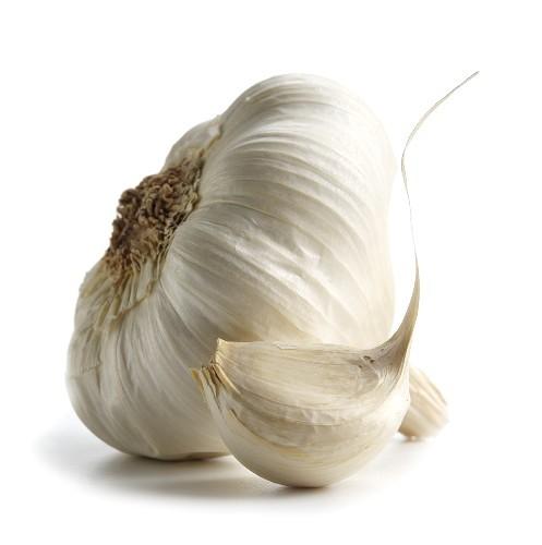 292 4 - HP Garlic
