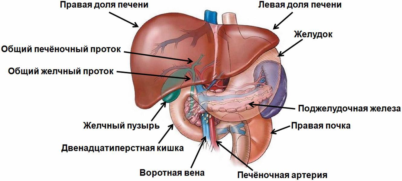 64773 2 - Set «Sănătate a ficatului»