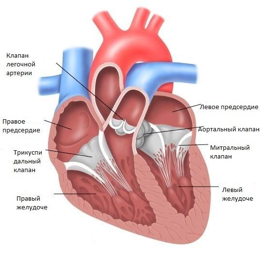 ard 3 54 - Набор «Здоровое сердце»