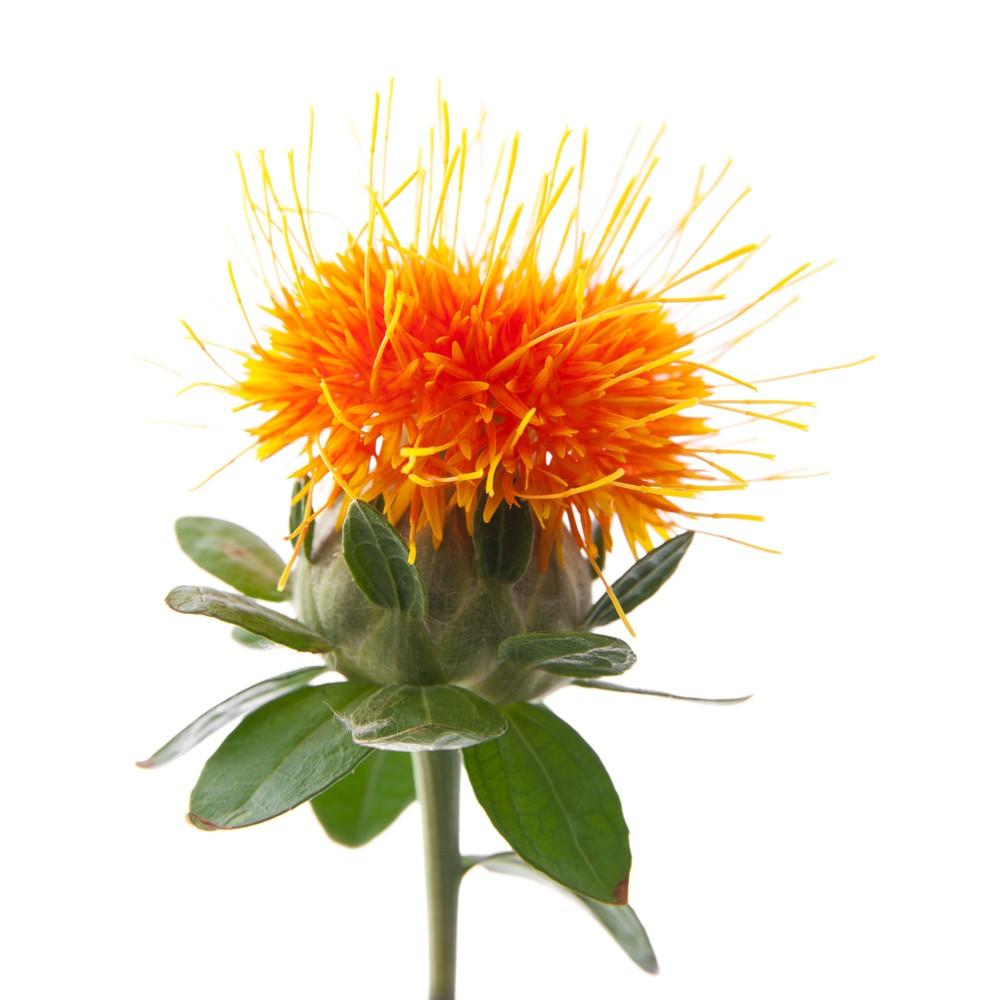 hot sell carthamus tinctorius l safflower seed - Riptide Clean Cut Shav. Cream — Крем для бритья