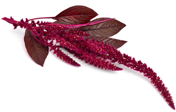 amaranth - Makeover Shampoo. Normal & Damaged Hair
